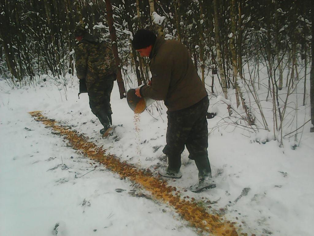 На Волині лісівники підгодовують тварин