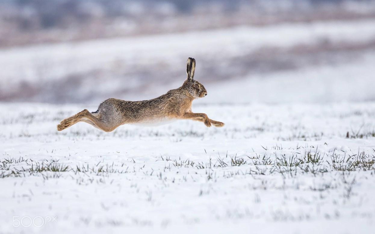Волинянин сплатив вісім тисяч збитків за незаконно добутого зайця
