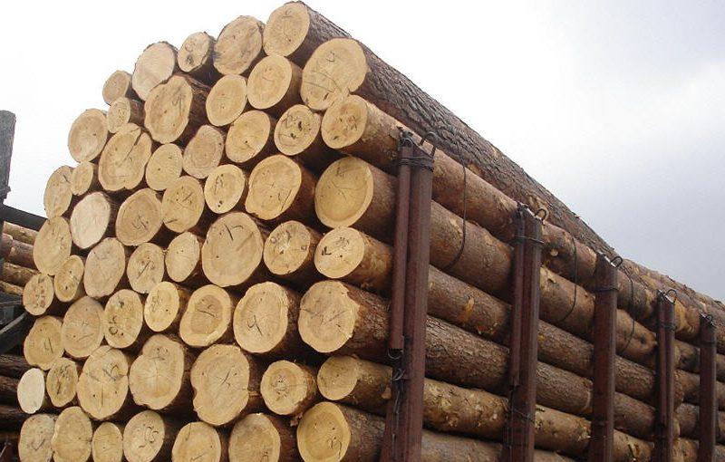 На Волині слідчі СБУ скерували до суду кримінальне провадження щодо контрабанди лісу
