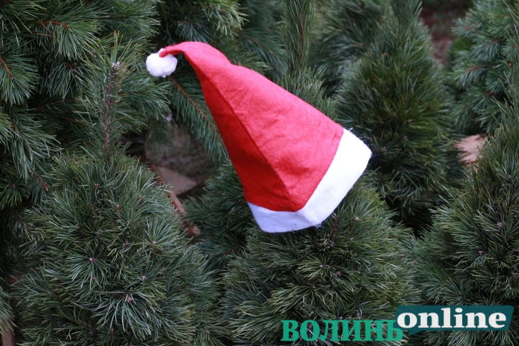Скільки різдвяних дерев продали волинські лісівники для українців
