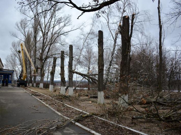 Депутати Луцькради розглянуть правила утримання та кронування зелених насаджень у місті