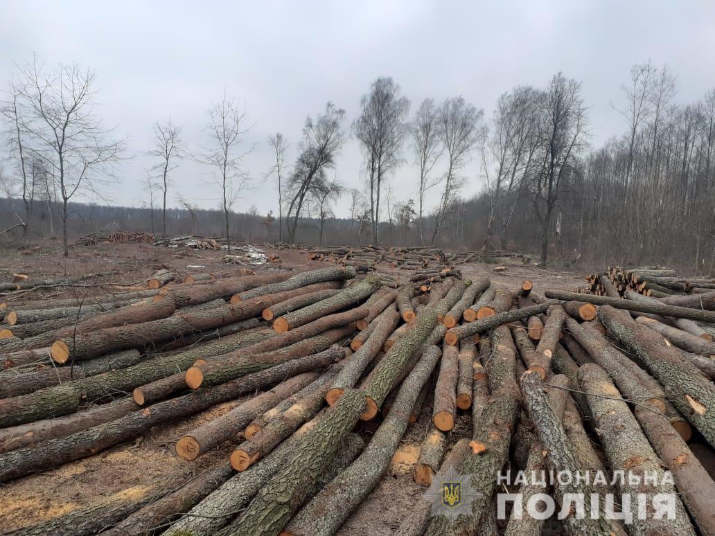 На Волині повідомили про підозру підприємцю, який скоїв незаконну порубку дерев у національному парку