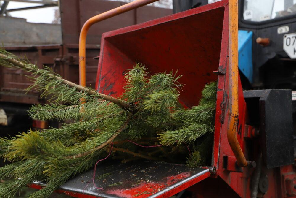 Жителям Боратинської громади пропонують утилізувати ялинки з користю для довкілля