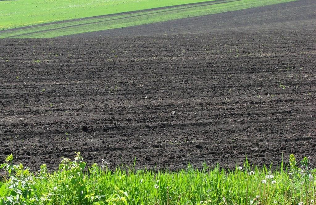У Рожищенській громаді обговорили, чому важливе управління земельними ресурсами