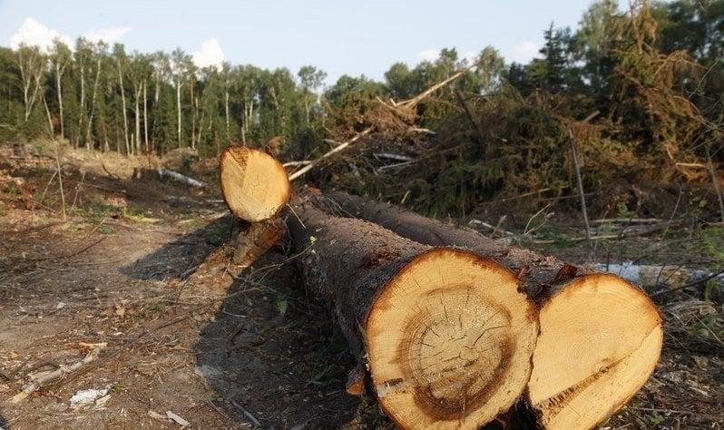 На Волині з лісгоспу стягнули понад 550 тисяч збитків