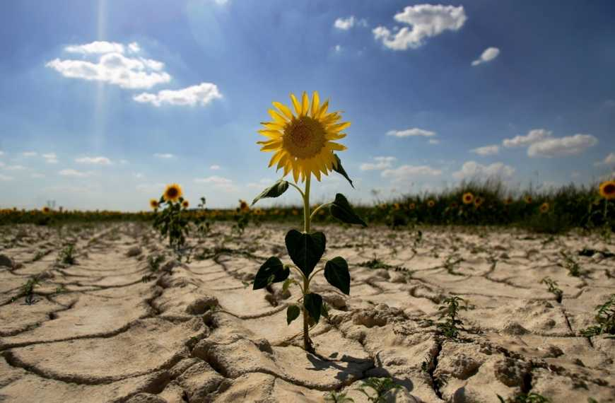В Україні почастішають посухи, суховії та град