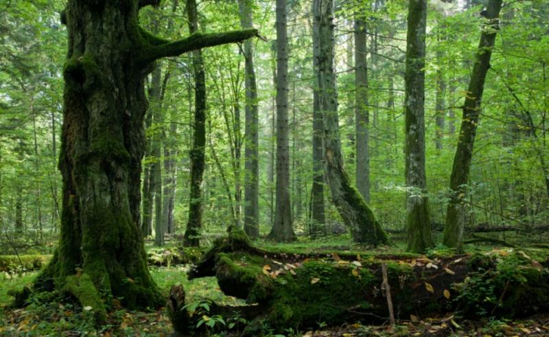 На Волині може побільшати об'єктів природно-заповідного фонду