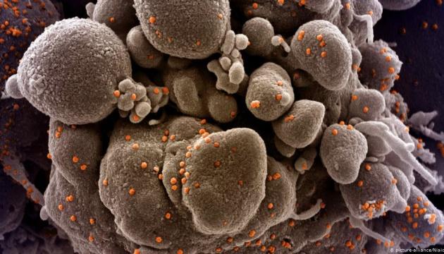 В Індії виявили два нових штами коронавірусу