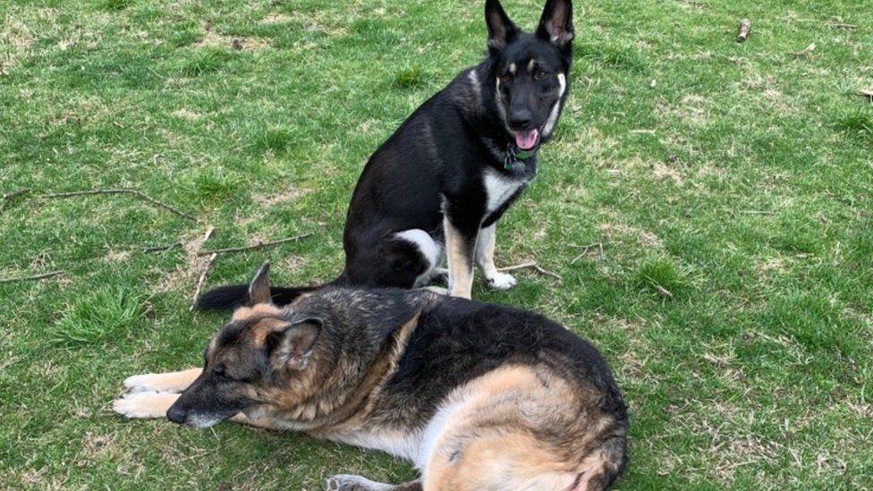 Собак Джо Байдена відправили з Білого дому після інциденту