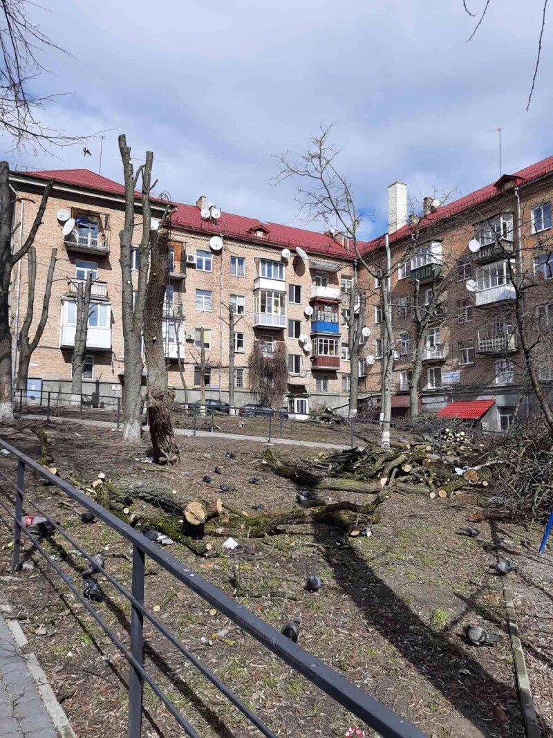 У центрі Луцька без дозволу кронували дерева