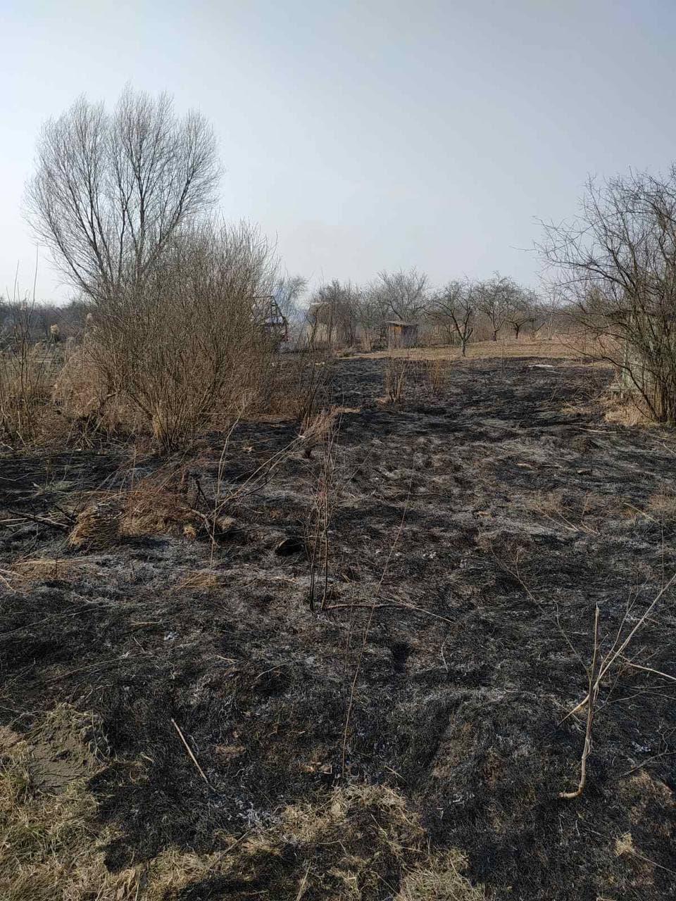 На Волині – пожежі в екосистемах