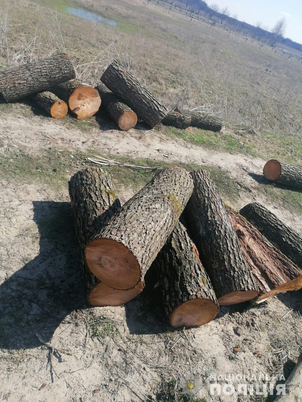 У Луцькому районі поліцейські викрили підпільного лісоруба