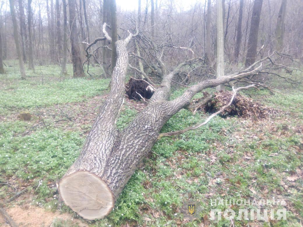 На Ківерцівщині виявили незаконні рубки лісу