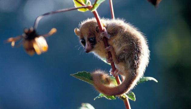 Учені назвали види тварин, які можуть зникнути на тлі глобального потепління