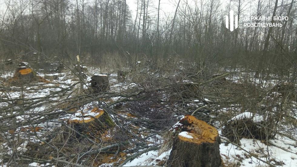 Екс-керівника Шацького національного парку судитимуть за завдання державі збитків на понад сім мільйонів