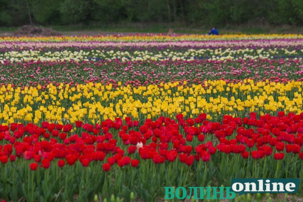 «Волинська Голландія» гостям у вишиванках зробить знижку на квиток