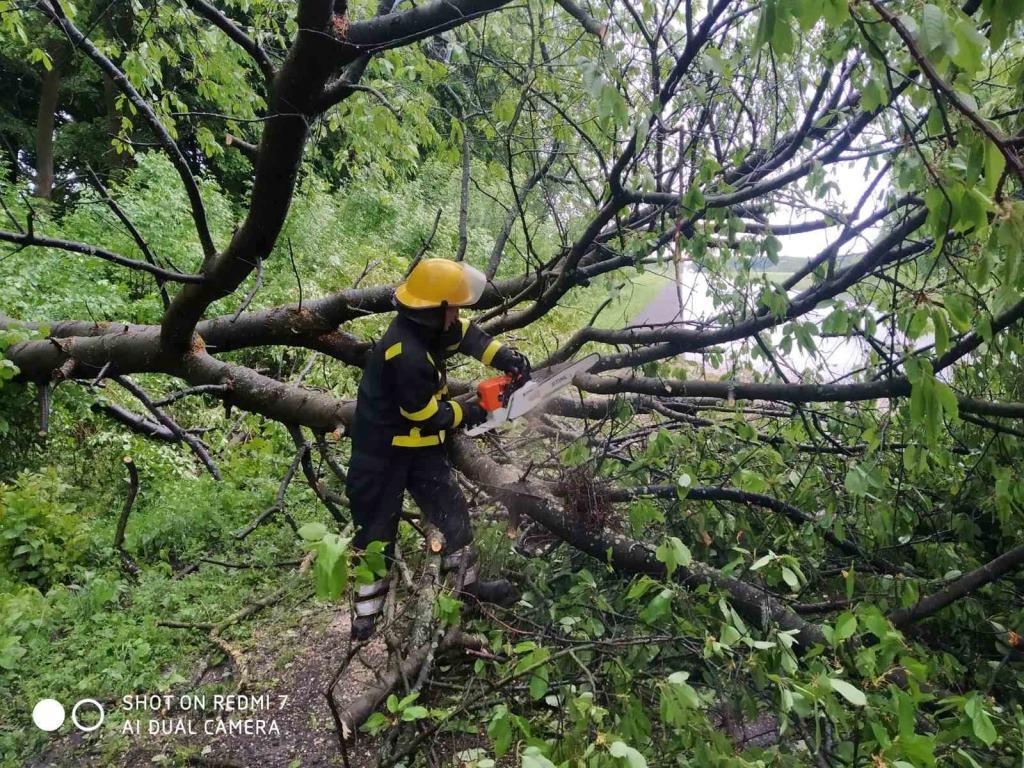 У Нововолинську повалене вітром дерево заблокувало вулицю