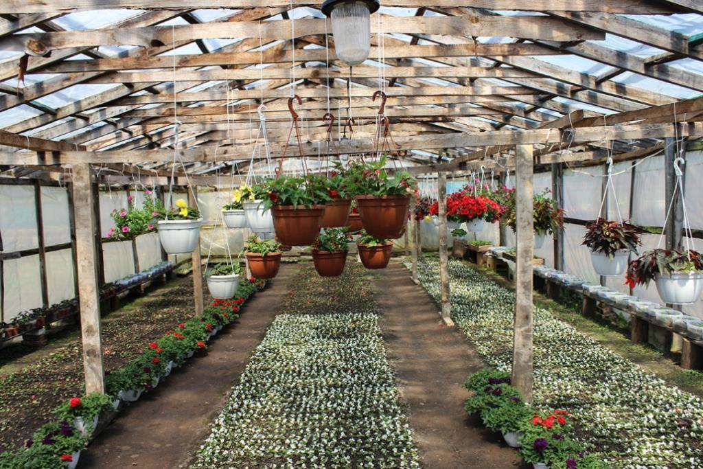 У Нововолинську комунальники за місяць висадили 16 тисяч рослин. ВІДЕО