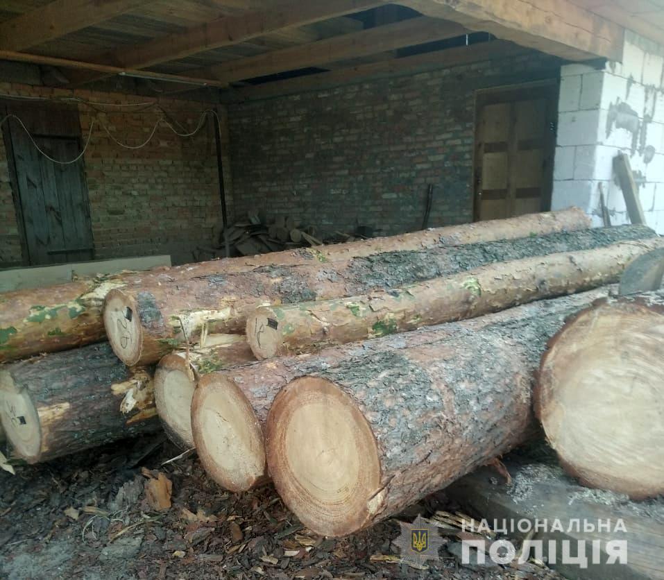За незаконну порубку лісу волинянину загрожує кримінальна відповідальність