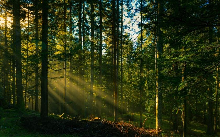 На Волині виділять у платне користування дві лісові ділянки Волинського лісового селекційно-насіннєвого центру