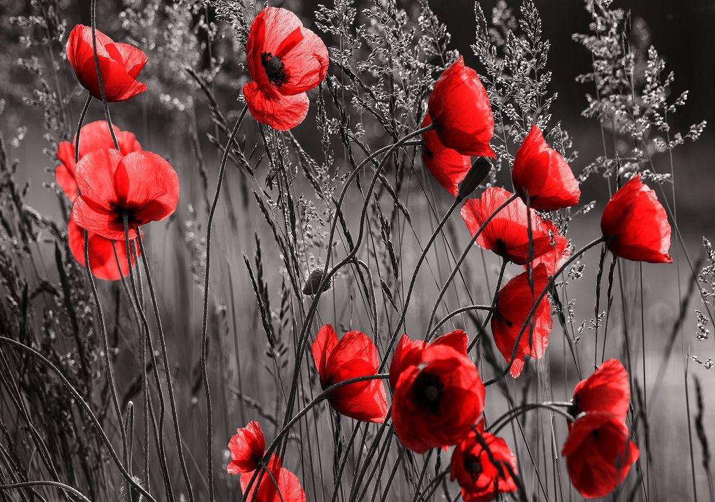Жителів Нововолинська закликають вшанувати пам'ять жертв війни