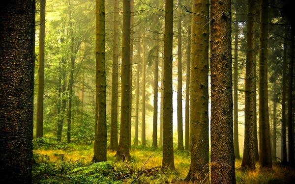 Суд визнав незаконною зміну цільового призначення земель лісового фонду вартістю 41 мільйон гривень на Волині