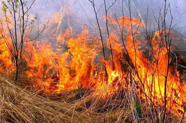 Необережне поводження з вогнем та палії: на Волині горіла суха трава