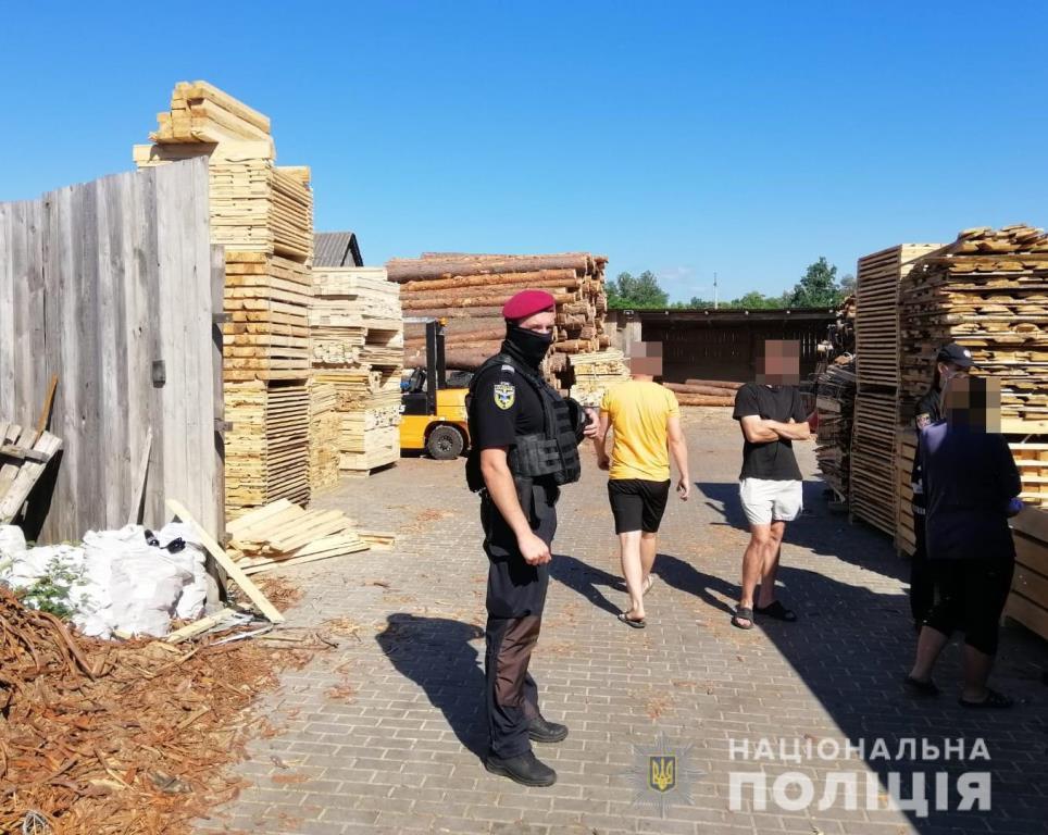 На Камінь-Каширщині вилучили сотні кубів незаконної деревини