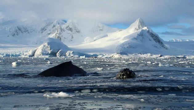 В Антарктиді підтвердили новий температурний рекорд