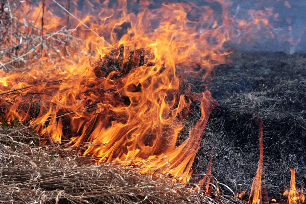 Поліція нагадує волинянам про відповідальність за спалювання сухої трави