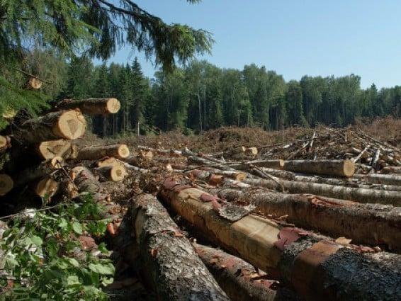 Волинський лісгосп має сплатити понад 508 тисяч за незаконні рубки