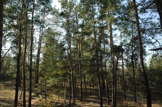 У власність держави на Волині через суд повернули ділянку лісового фонду вартістю 14,6 мільйона