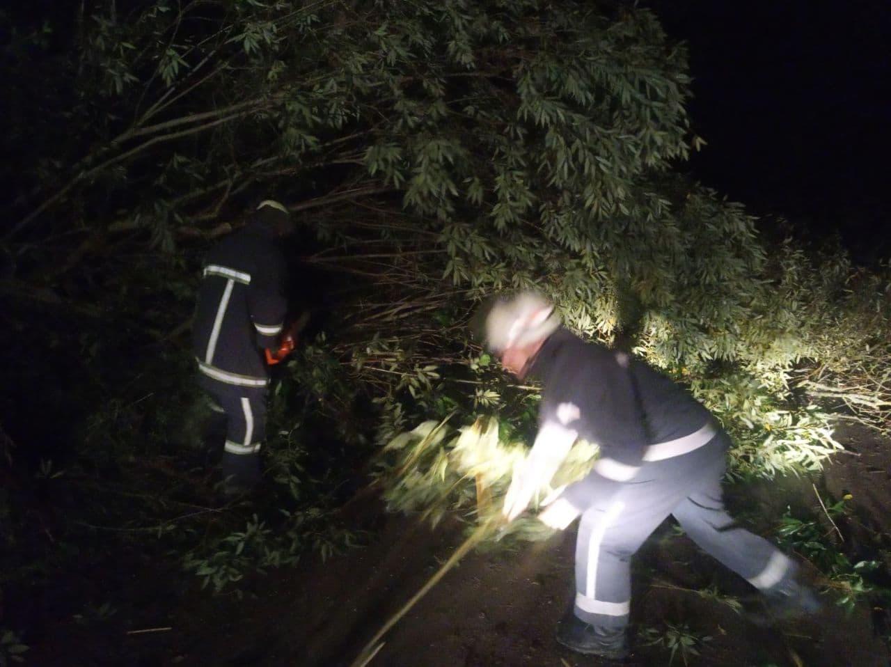 Кубло ос та повалені дерева: волинські рятувальники тричі за добу виїжджали для проведення аварійно-рятувальних робіт