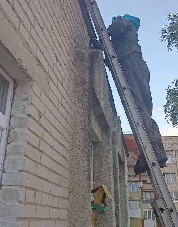 У Нововолинську рятувальники знешкодили гніздо шершнів