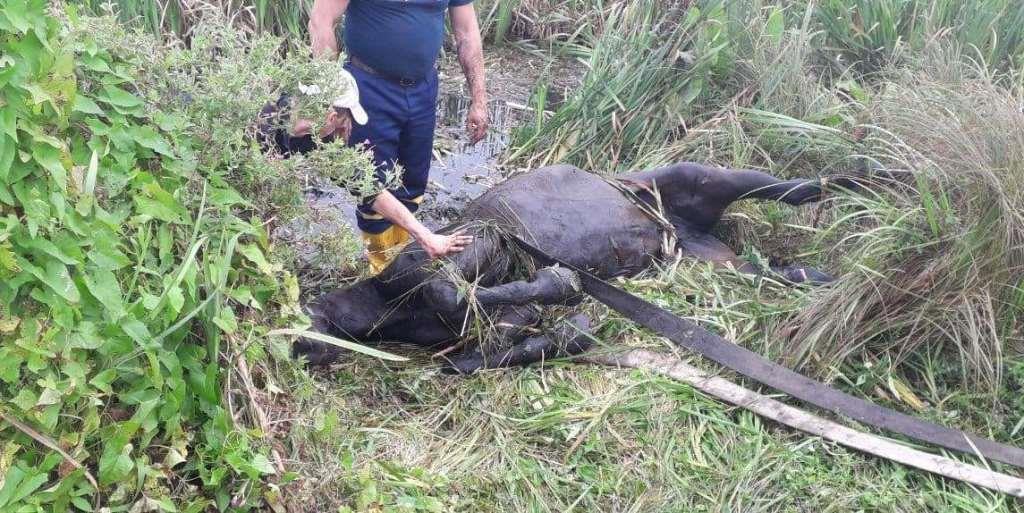 На Волині рятувальники допомогли витягнути коня з меліоративного каналу