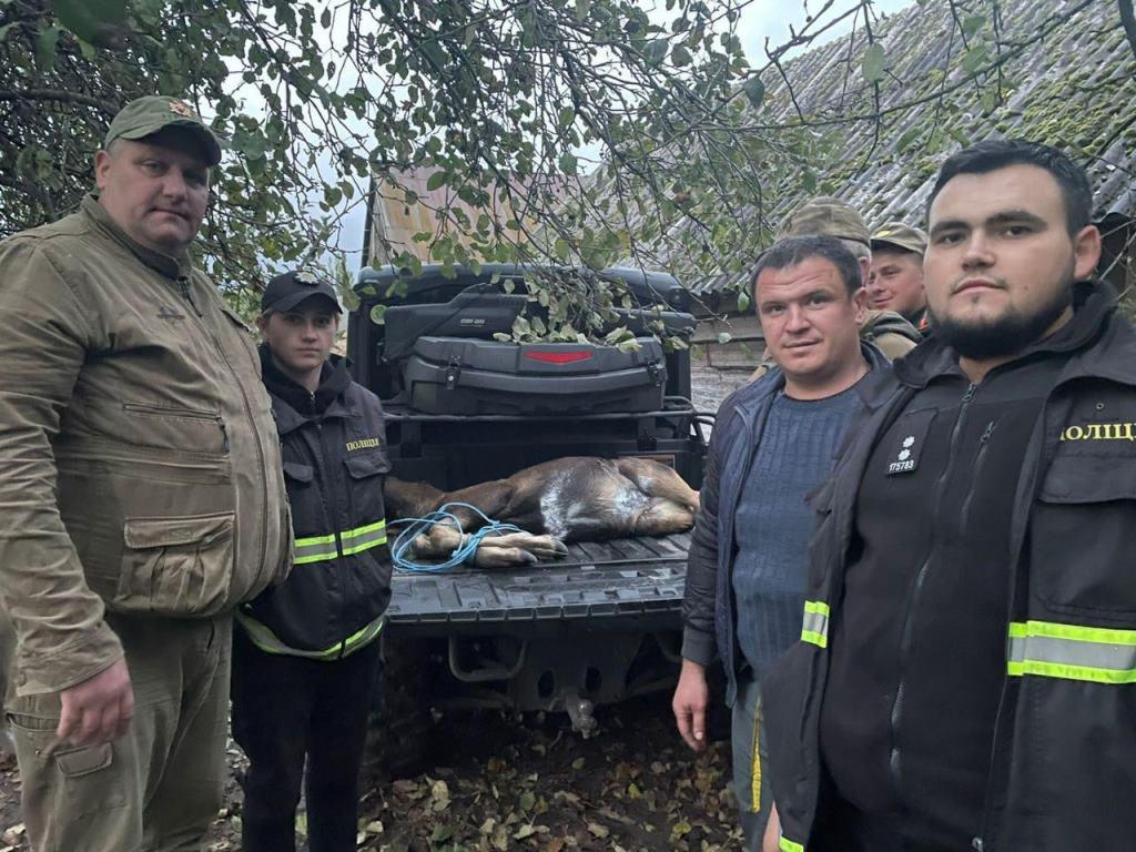 У Луцькому районі спільними зусиллями поліції і небайдужих врятували лосеня