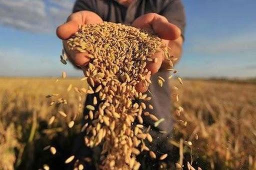 Як європейська політика та зміна клімату вплинуть на місцевих аграріїв