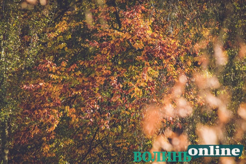 На початку жовтня в Україні очікуються сонячна погода та нічні приморозки