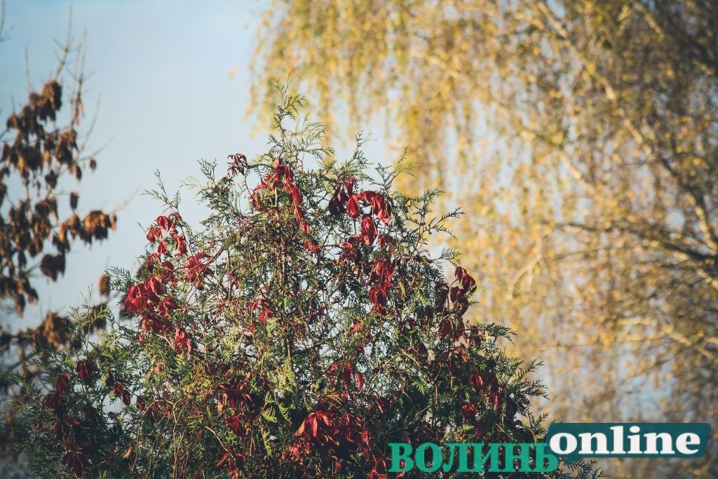 Сильний поривчастий вітер принесе в Україну потепління