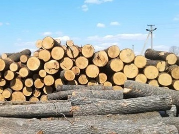 Волинянин постане перед судом за зберігання незаконно зрубаних дерев