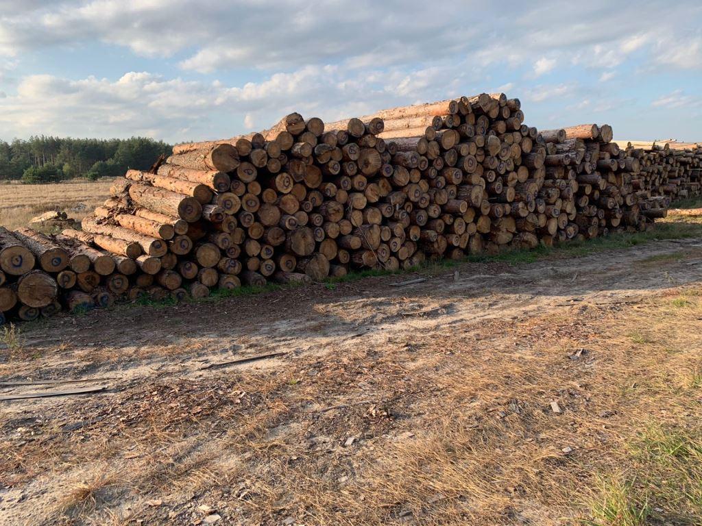 На Волині вилучили понад 700 метрів кубічних деревини сумнівного походження