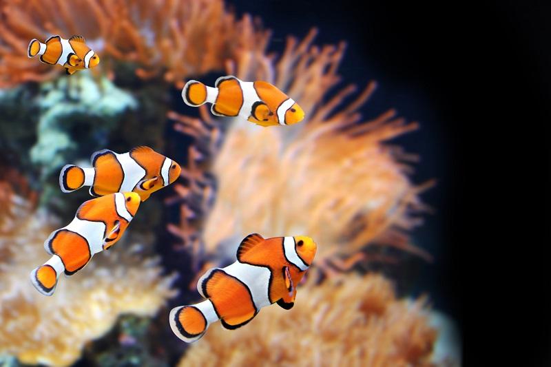Цікаві факти про морських риб*