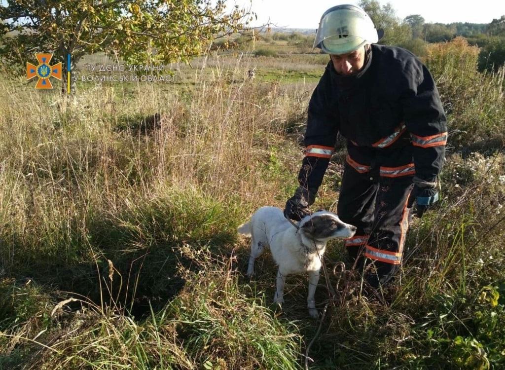 На Волині рятувальники визволили собаку з глибокої ями